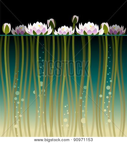 Water Lilly And Bubbles