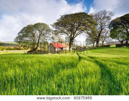 Old Barn In A Barley Field
