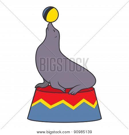 Seal juggles the ball