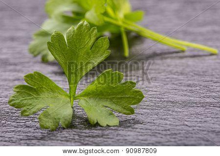 Parsley Top . Parsley twig. Fresh parsley top on granite board.