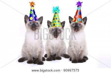 Siamese Kittens Having a Birthday Celebration