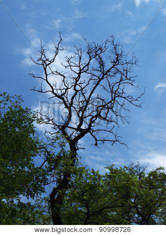 Dryness Branch
