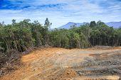 Deforestation environmental problem as rain forest jungle destroyed for human development poster