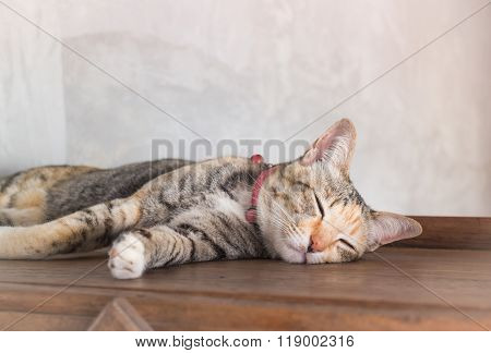 Young Cat Asleep At Home