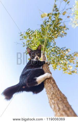 Funny cat climbing at the tree and observing down, focus on the face.