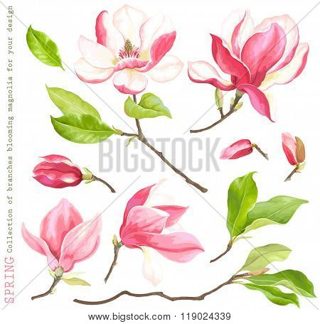 Spring collection of blooming branches magnolia for your design, vector illustration.