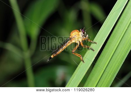 Dragonfly macro photography