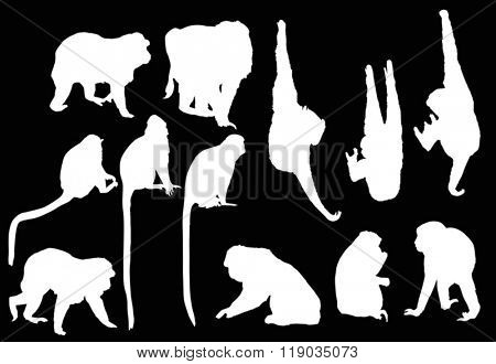 illustration with different monkey silhouettes isolated on black background