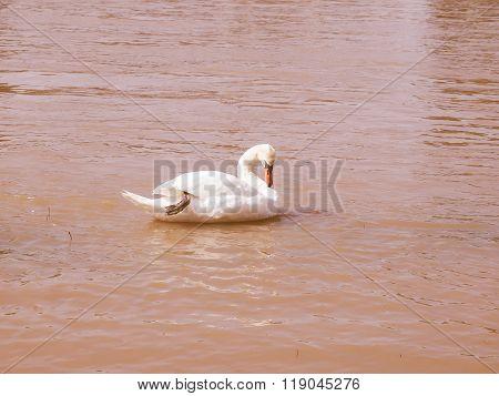Retro Looking Swan Bird