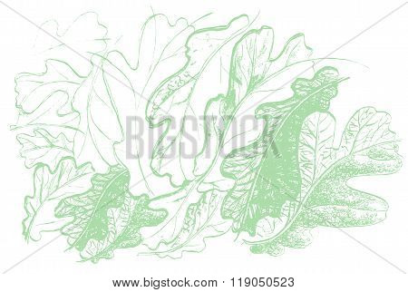 Leaf Of Oak Tree. Autumn Defoliation In The Nature