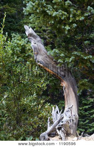 The Tree Limb