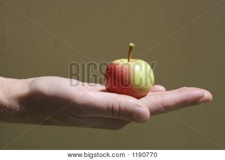 Baby Apple In A Palm