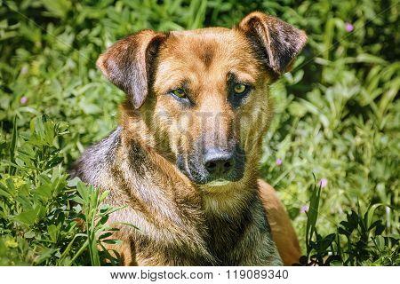 Portrait Of Sstreet Dog