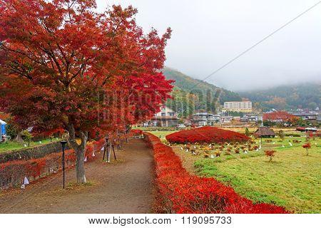 Autumn Foliage At Maple Corridor In Kawaguchiko