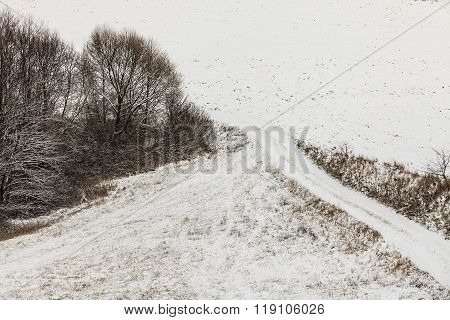 Trees In Field Covered By Snow. Winter Scenery