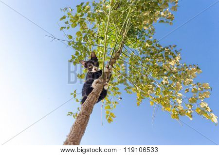 Funny cat climbing at the tree and observing down, focus on the face. poster