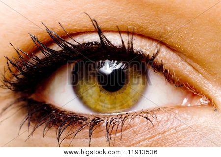 Hazel color eye of a woman