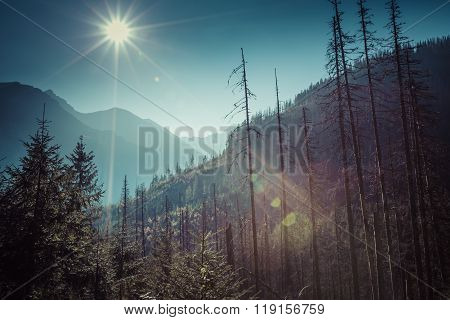 Summer View Of Forest With Coniferous Trees Heavily Damaged By A Strong Windstorm.view Of Tatra Moun
