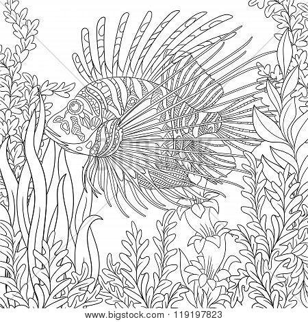 Zentangle Stylized Zebrafish (lionfish)