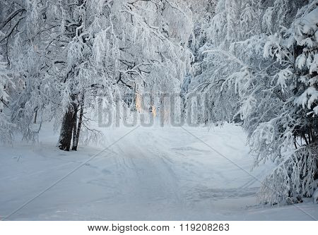 Snow-covered winter wonderland scene. Footpath in a forest.
