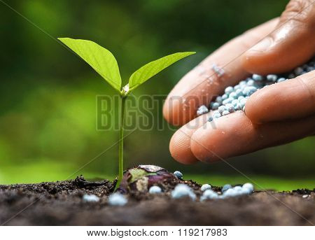 hand giving chemical fertilizer to a young baby plant
