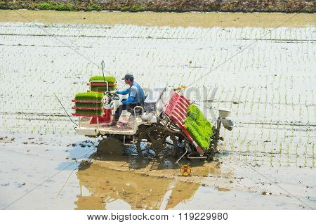 Rice planting by rice transplanter in Seoul.