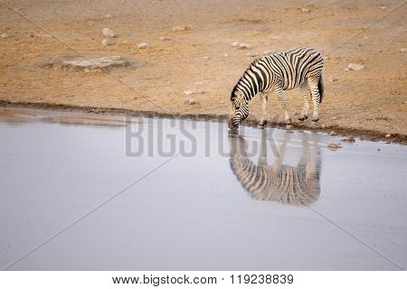 Zebra drink at a water hole in Etosha National Park