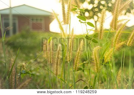 Silhouette Grass Field In Front Of Home With Sunlight Rim Light