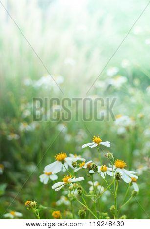 Silhouette Flower Blade Of Grass Field Sunlight Rim Light