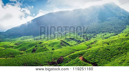 Panorama of green tea plantations in Western Ghats in the morning. Munnar, Kerala, South India