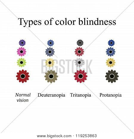Types of color blindness. Eye color perception. Vector illustration on isolated background