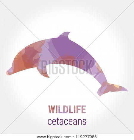Wildlife banner - cetaceans dolphin