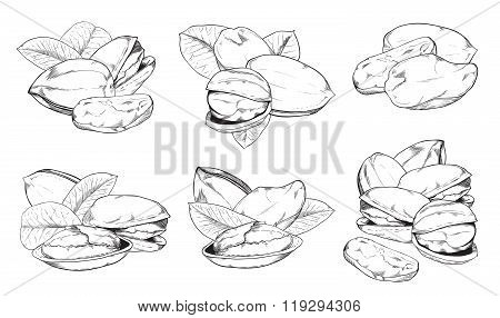 Pistachio on white background. Isolated nuts.