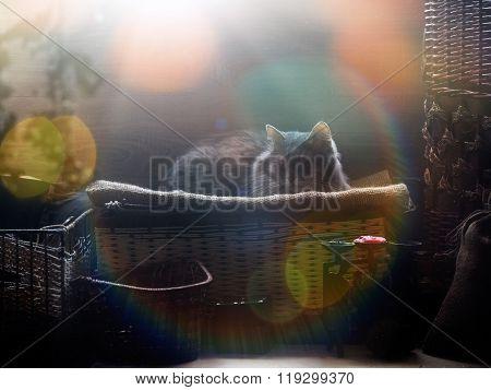 The cat in the attic in the sun