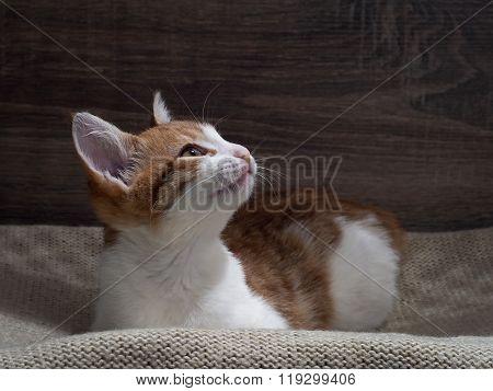 Portrait of a contented cat