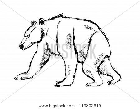 Bear. Hand Drawn Vector Illustration On White Background.