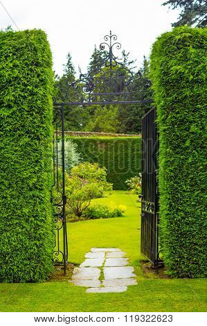 Old Iron Garden Gate With High Hedges