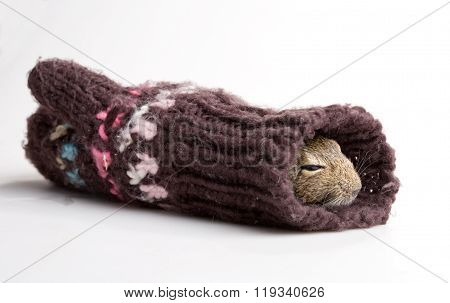 Mouse In Mitten