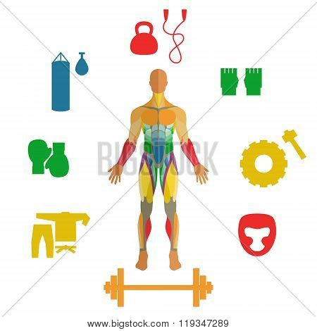 Human muscles with icons of sport equipment. Exercise and muscle guide. Gym training. Muscle man ana
