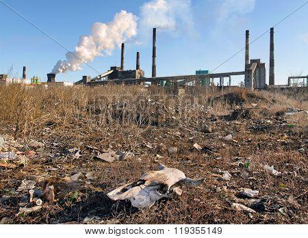 Skull In A Landfill Near The Plant Enterprise
