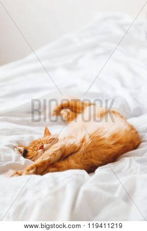 Ginger Cat Sleeping In Bed With It's Toy Mouse. Cute Cat Dozing On White Blanket. Cozy Home