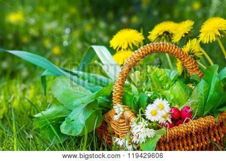 Collected Wild Herbs In Basket