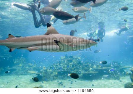 Sharkfishndive