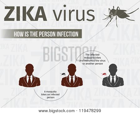 Zika virus infographic template include infection path. EPS 10