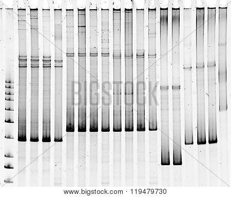 Mutation screening in polyacrylamide gel