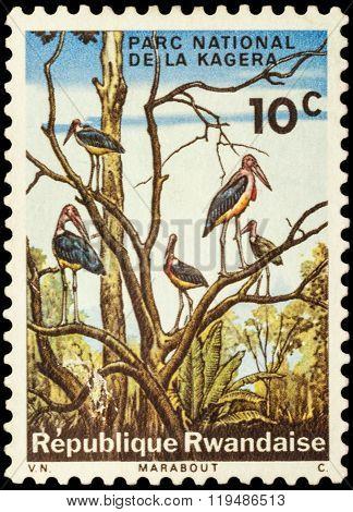 Marabou Storks On Postage Stamp