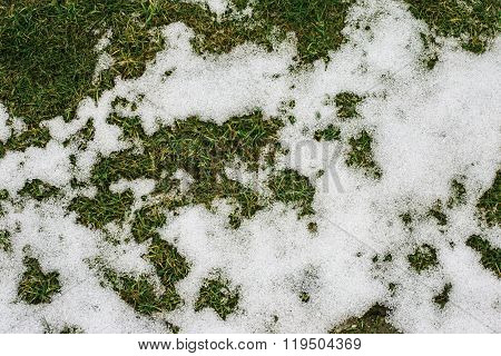 grass and snow in spring