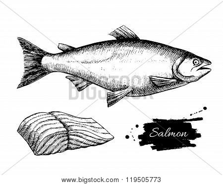 Vector Vintage Salmon Drawing. Hand Drawn Monochrome Seafood Ill