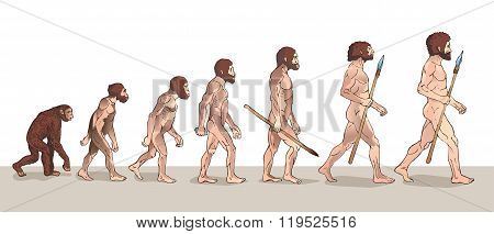 Human Evolution. Man Evolution. Historical Illustrations. Human Evolution Vector Illustration. Progress Growth Development. Monkey. Neanderthal. Homo Sapiens. Primate With Weapon and History.