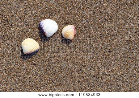 Three shells on the beach